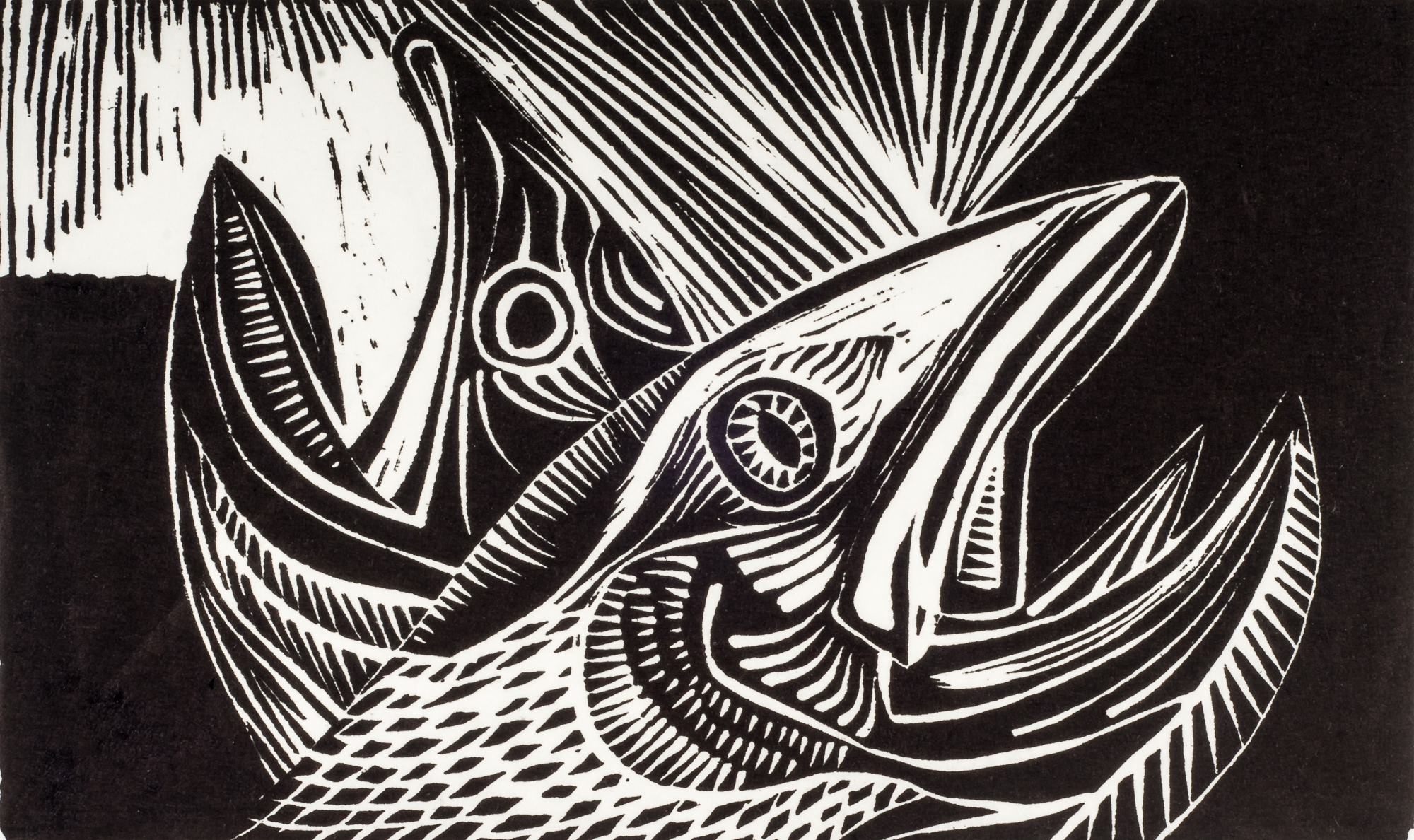Dying Salmon | 8 3/8 x 14 | 1954