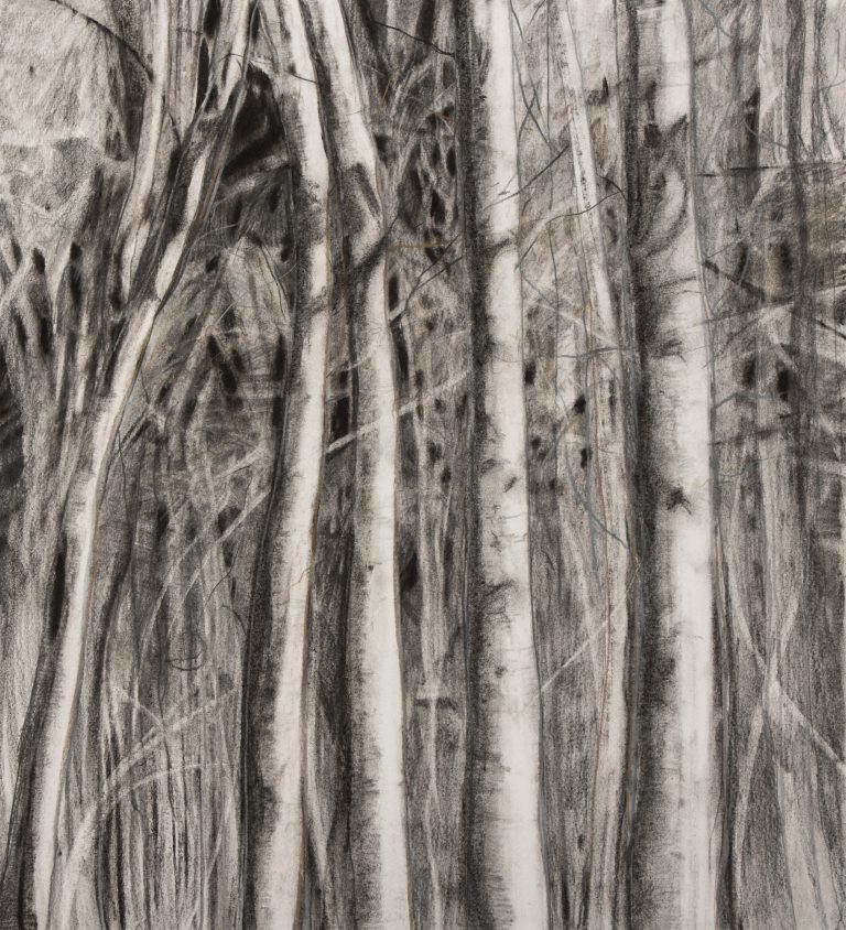 Aspen 24x21½, graphite and charcoal on paper
