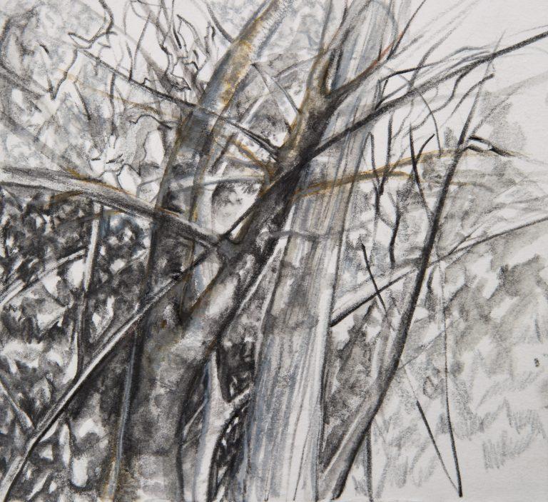 Tree Study 2 | 6x6