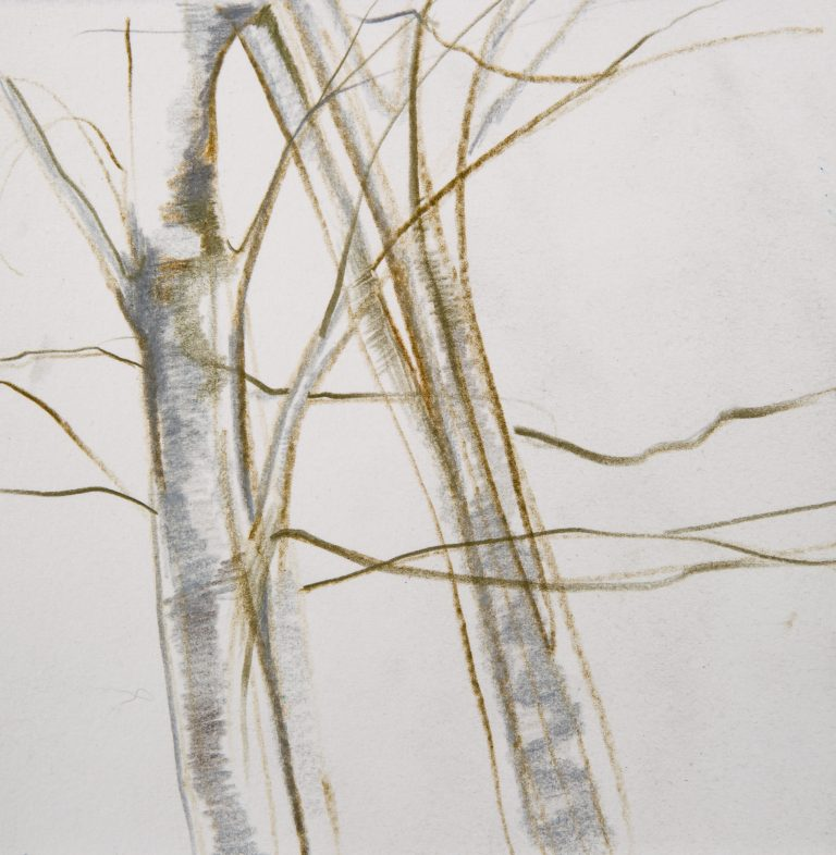 Tree Study 4 | 6x6