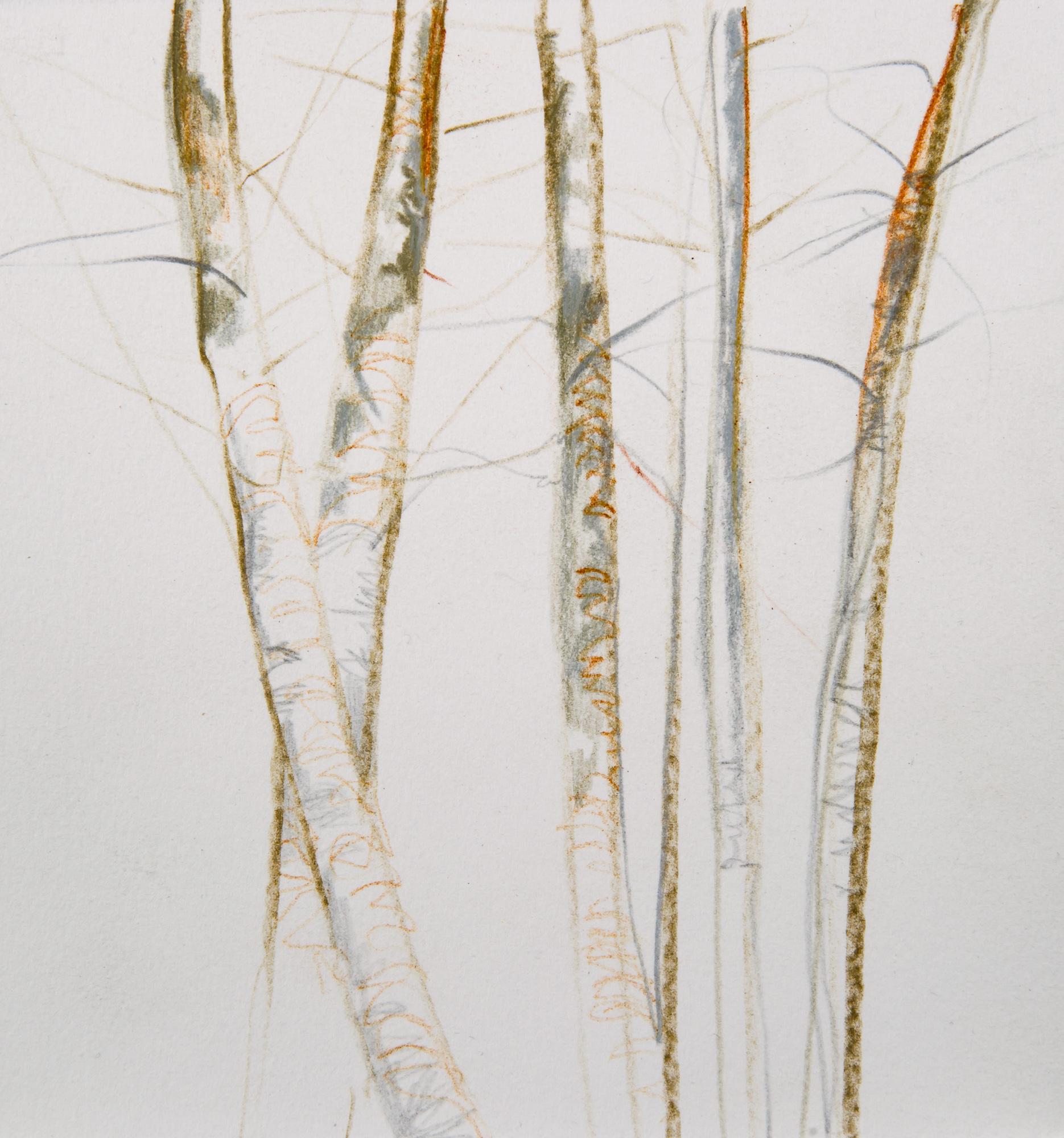 Tree Study 3 | 6x6
