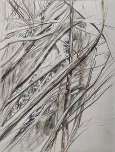Thicket Study | 12x9